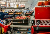 Bez języka oferta pracy w Holandii przy pakowaniu – pakowacz warzyw i owoców, Haga