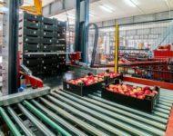 Fizyczna praca Holandia bez języka od zaraz sortowanie jabłek i gruszek, Houten