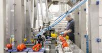 Dla par oferta pracy w Holandii od zaraz na produkcji bez języka przy warzywach i owocach Haga