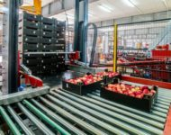 Dla par praca w Holandii bez języka na produkcji od zaraz przy owocach i warzywach, Haga