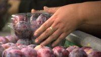 Haga praca w Holandii dla pakowaczy przy pakowaniu owoców i warzyw