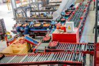Dla par praca w Holandii od zaraz bez języka przy sortowaniu-pakowaniu owoców i warzyw