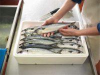 Bez znajomości języka Niemcy praca od zaraz na produkcji przy obróbce ryb, Rostock