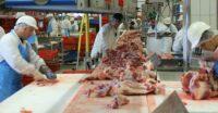 Praca we Francji na produkcji mięsnej jako rzeźnik-wykrawacz bez języka w Montaigu