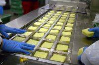 Dla par od zaraz praca w Danii przy pakowaniu sera bez znajomości języka, Aalborg 2021