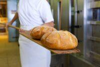 Dam pracę w Holandii od zaraz na produkcji pieczywa w piekarni z Uden